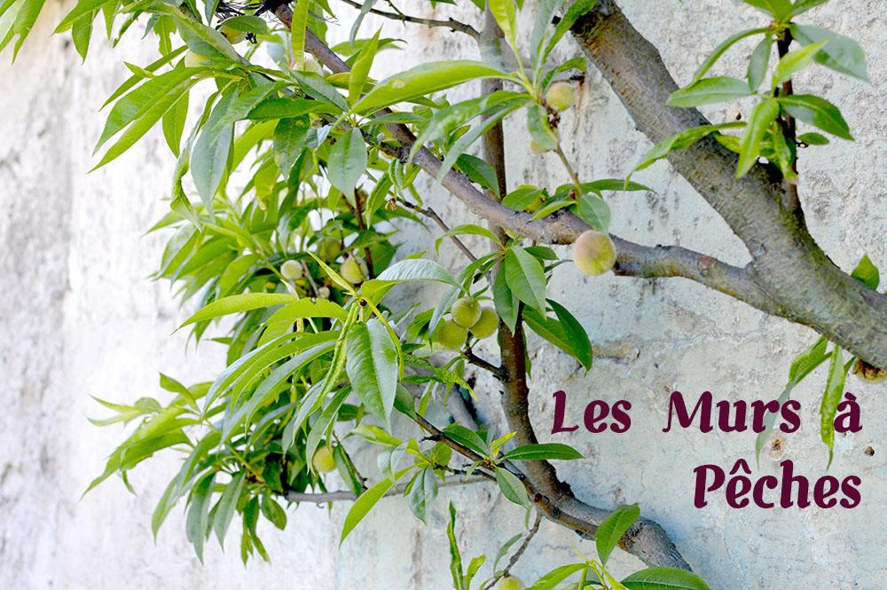 murs-a-peches-montreuil-1