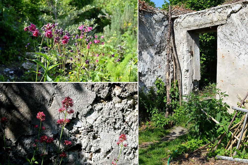 murs-a-peches-montreuil-4